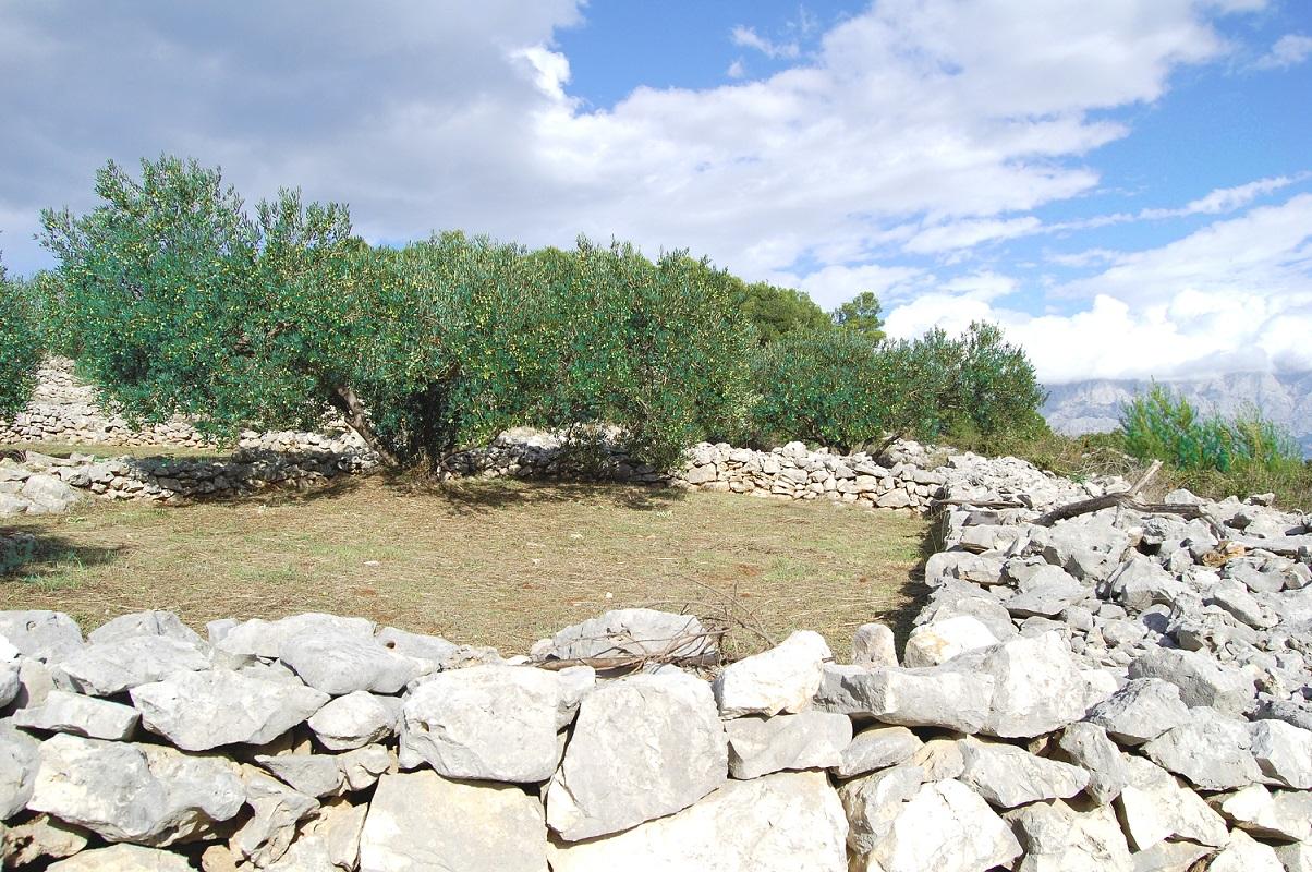 Olive slide